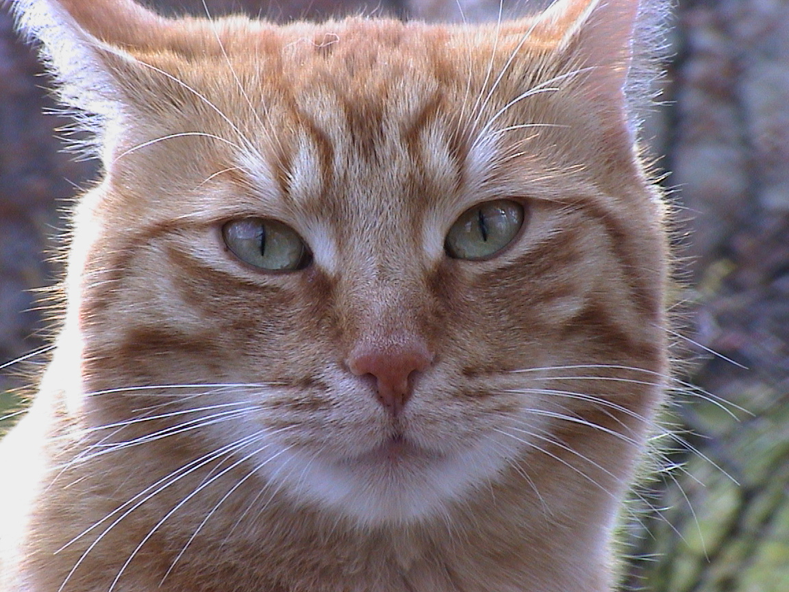 Pixle Cat Picture