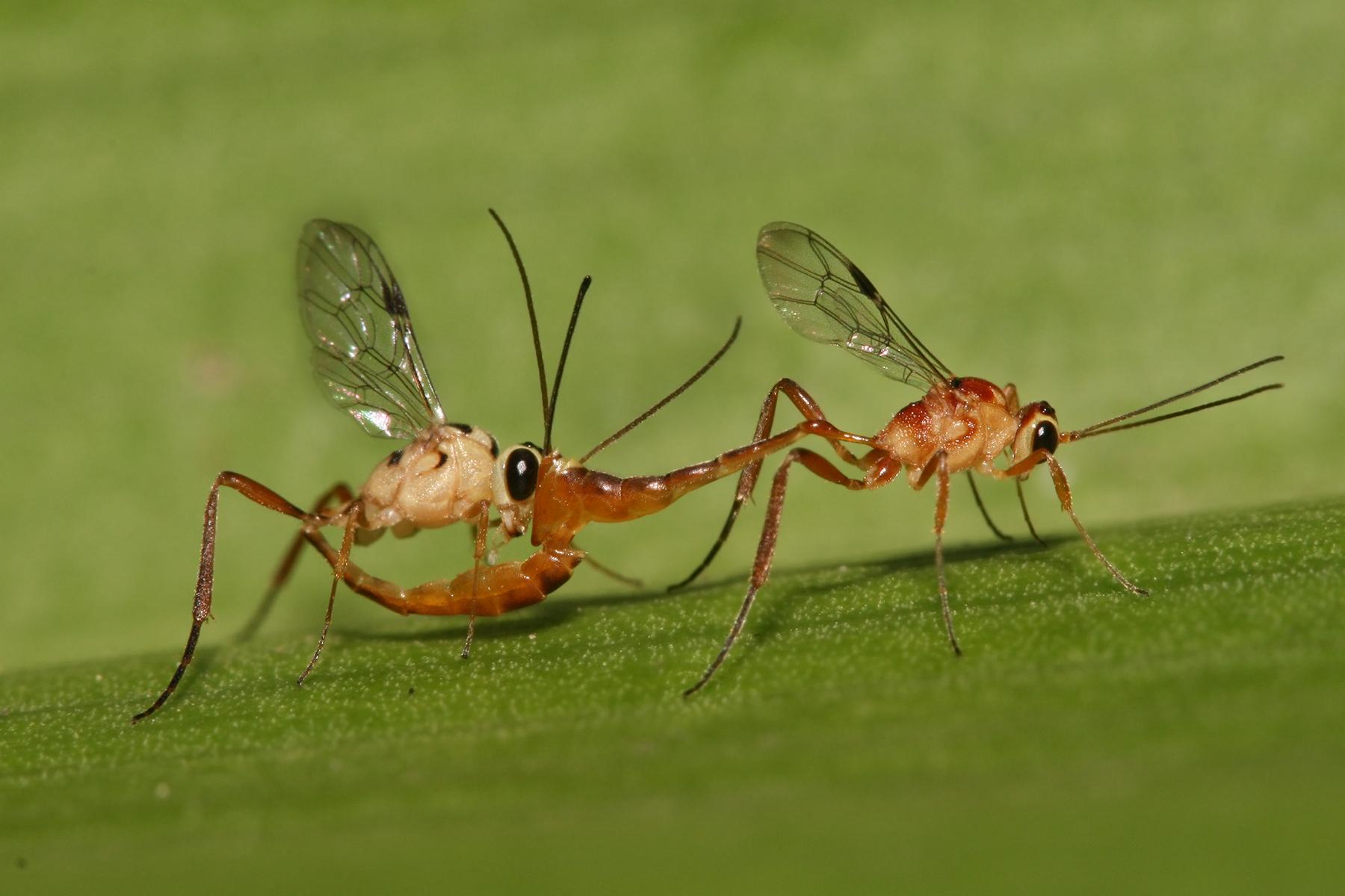 Can A Wasp Sting Make My Dog Lethargic