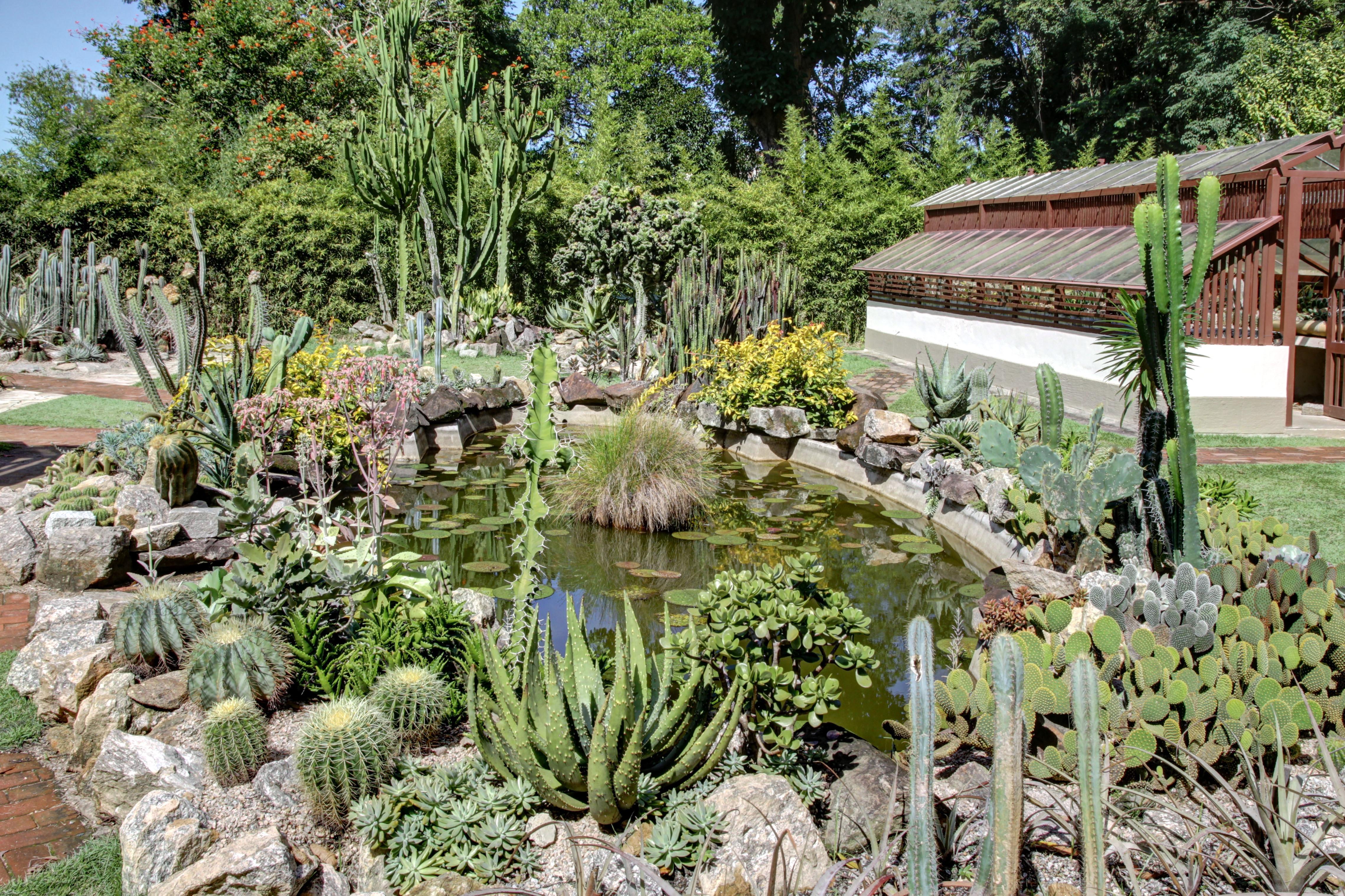 File jbrj cact wikimedia commons for Bodas en el jardin botanico de rio piedras