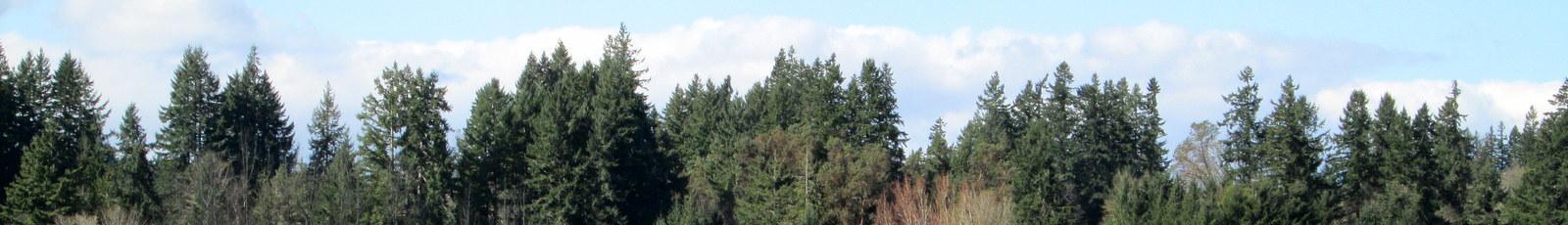 File Lumpytrout Wikivoyage Page Banner Kitsap Puget Sound