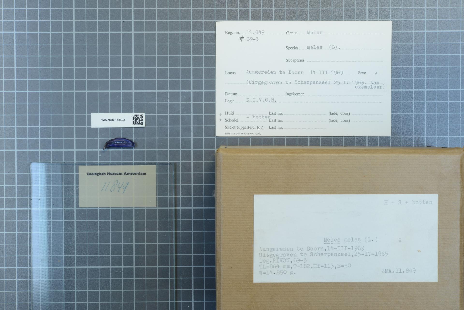 Filenaturalis Biodiversity Center Zmamam11849c Lab
