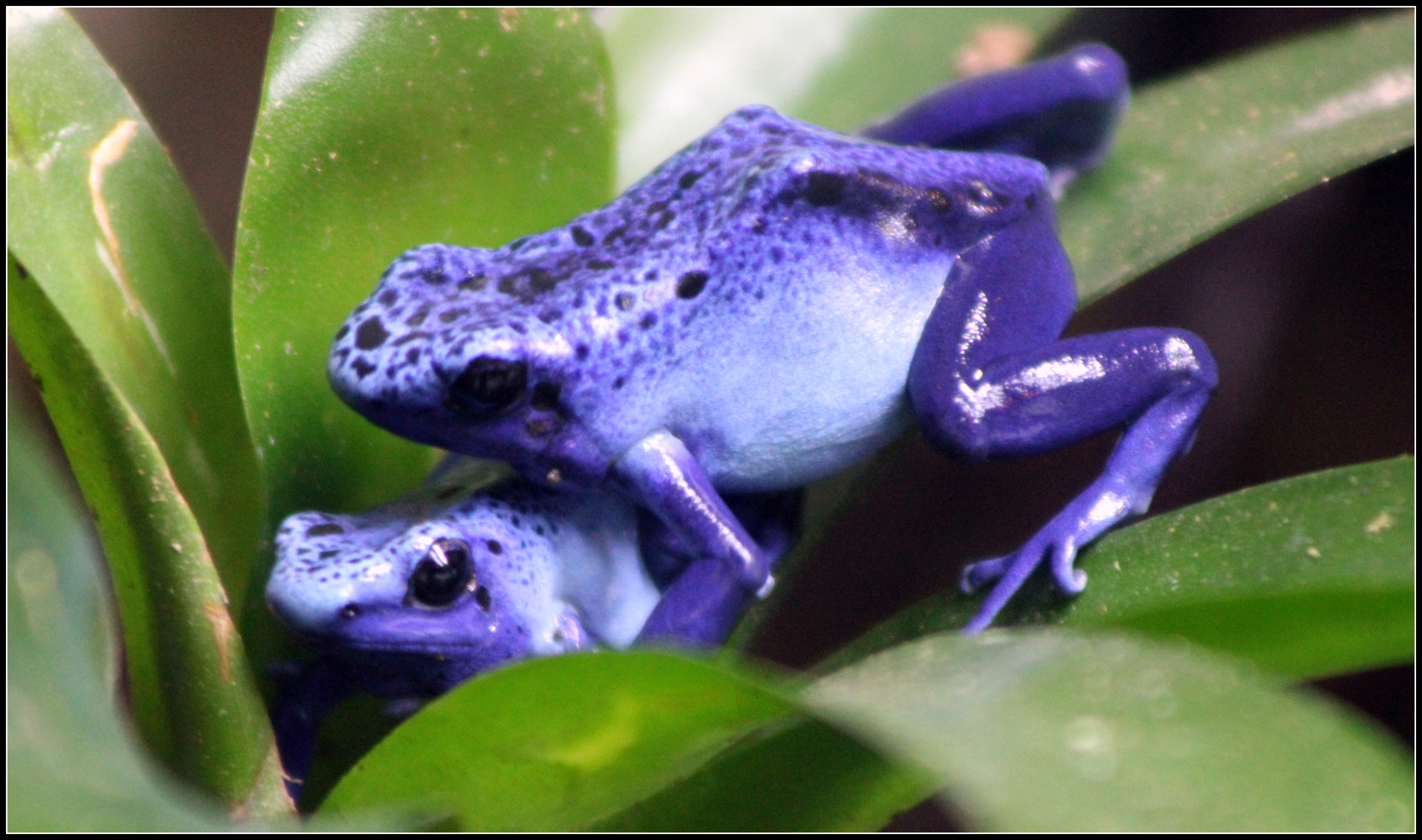 frog dating website An online dating website can give people the opportunity to share their stories, but you want to be careful heads up a common scam involves a tragic or sad story that makes you feel sorry for the person.