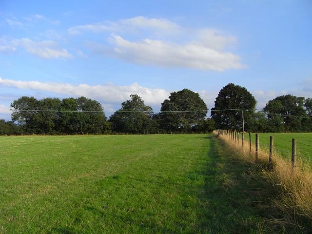 Pasture, Ashford Hill - geograph.org.uk - 1563265