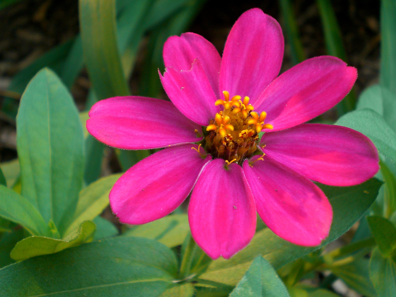 File Pinkflower