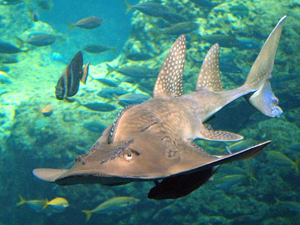 10 Terrifying Killer Fish  Listverse
