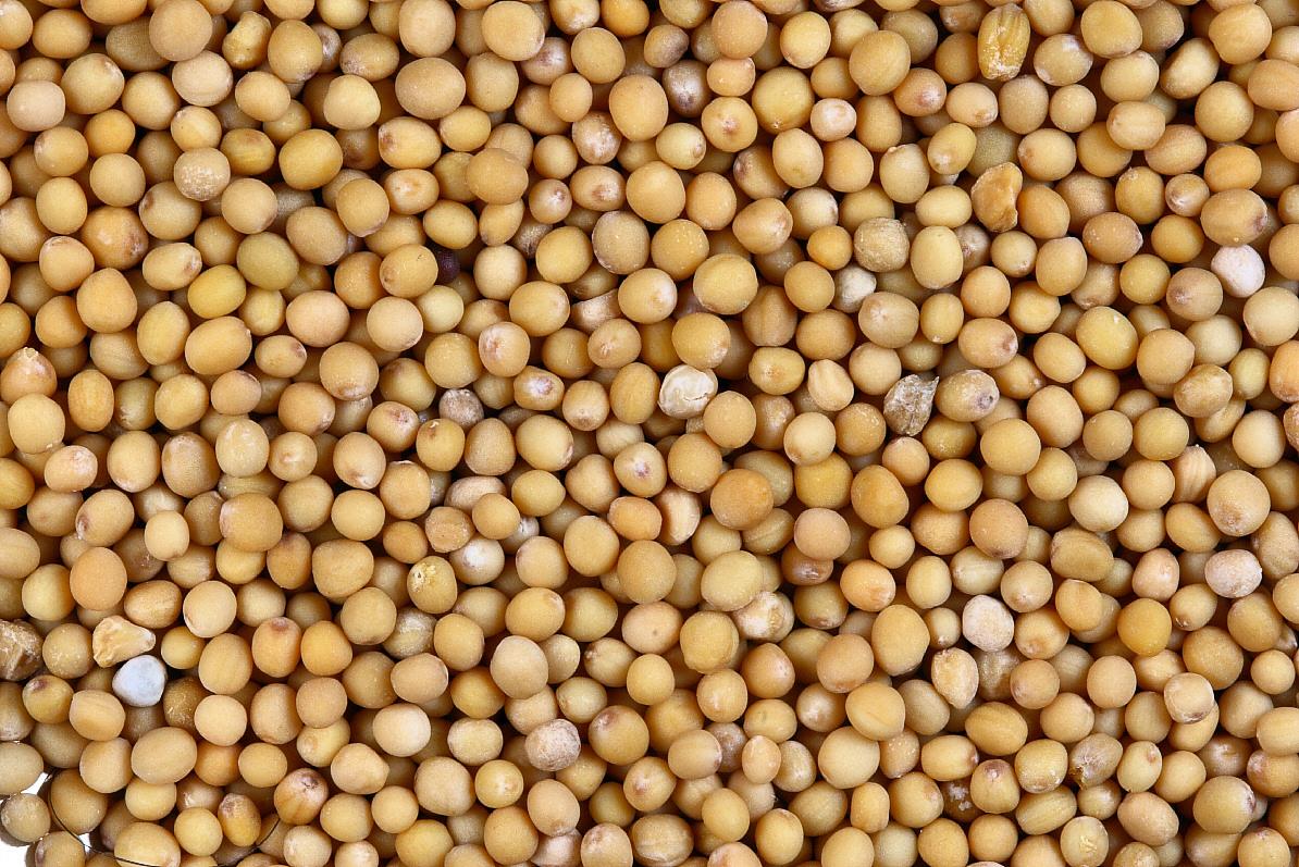 World Food Seed Bank