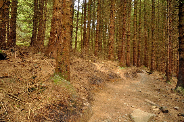 Section of the Granada bike trail - Afan Forest Park - geograph.org.uk - 1503373