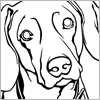 Sophie drawing Weimaraner.PNG