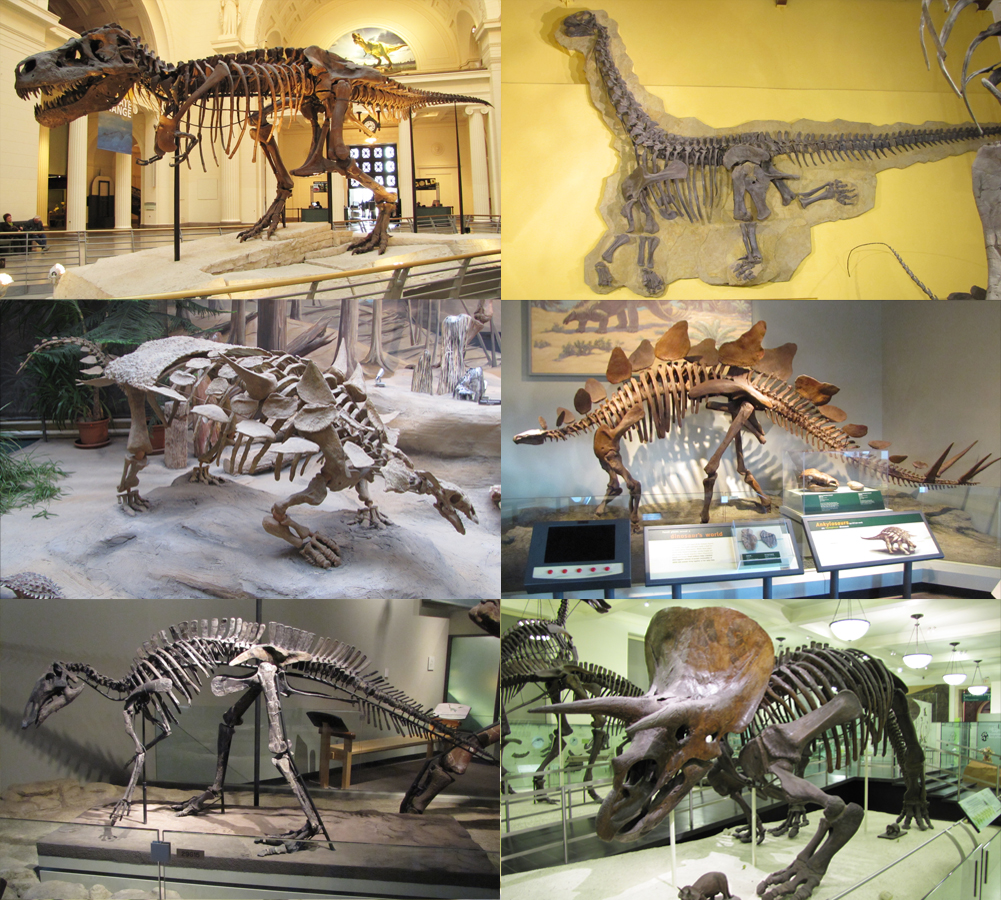 dinosaure � wikip233dia