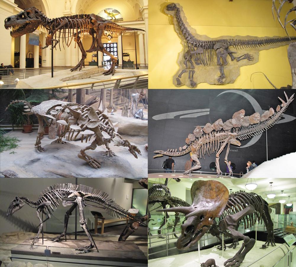 Dinosaure wikip dia - Dinosaur volant ...