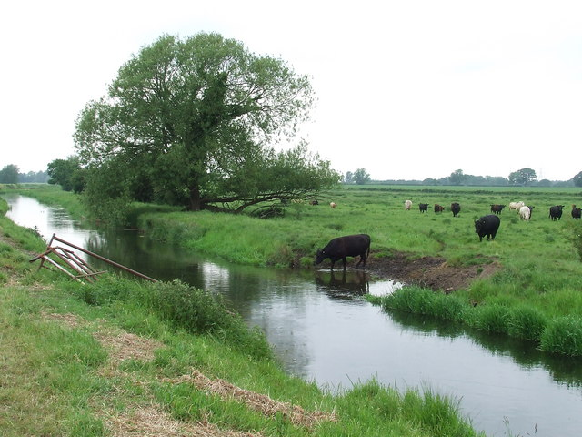Watering the cows - geograph.org.uk - 823309