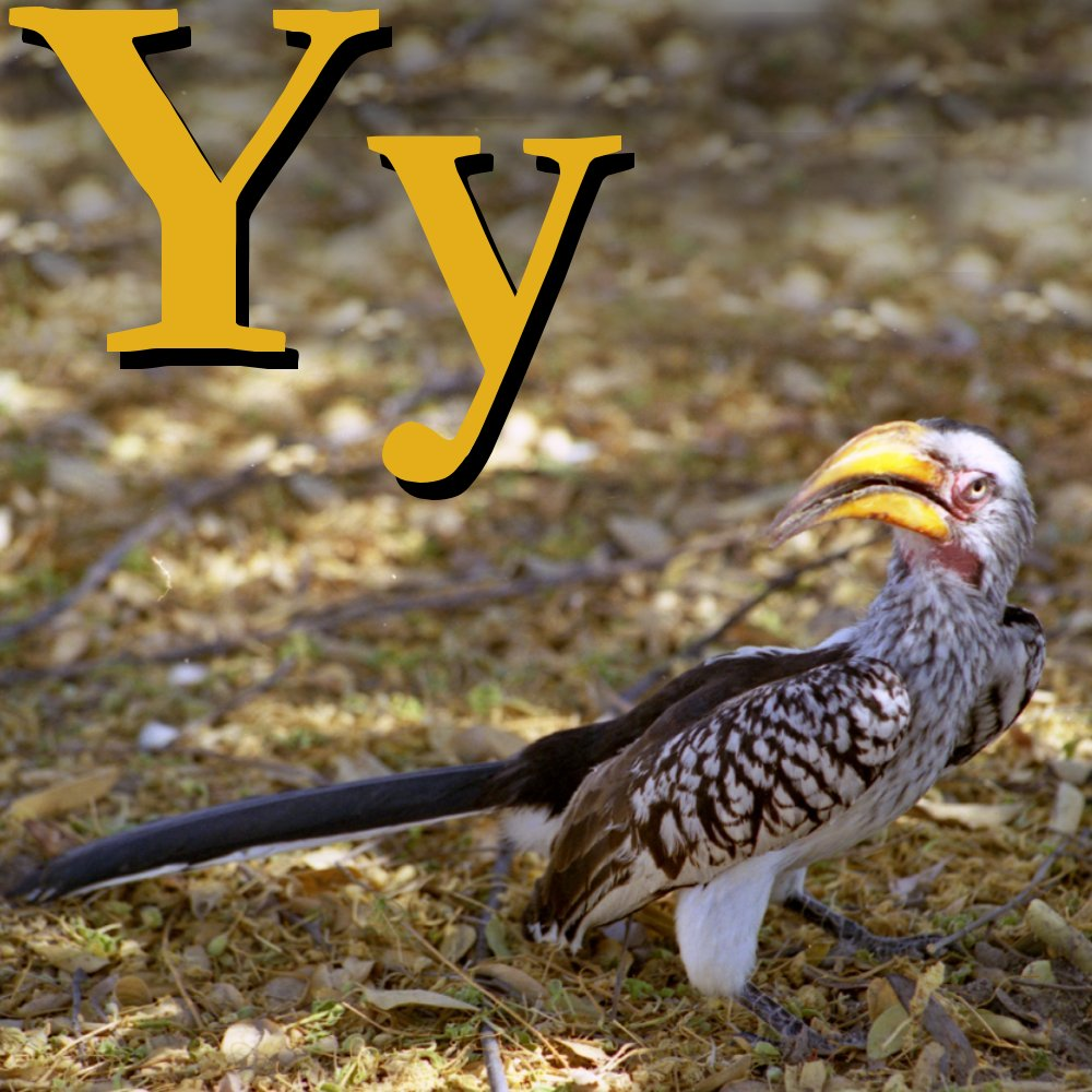 Names Of Animals With The Letter Y