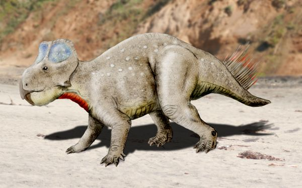 zhuchengceratops wikipedia