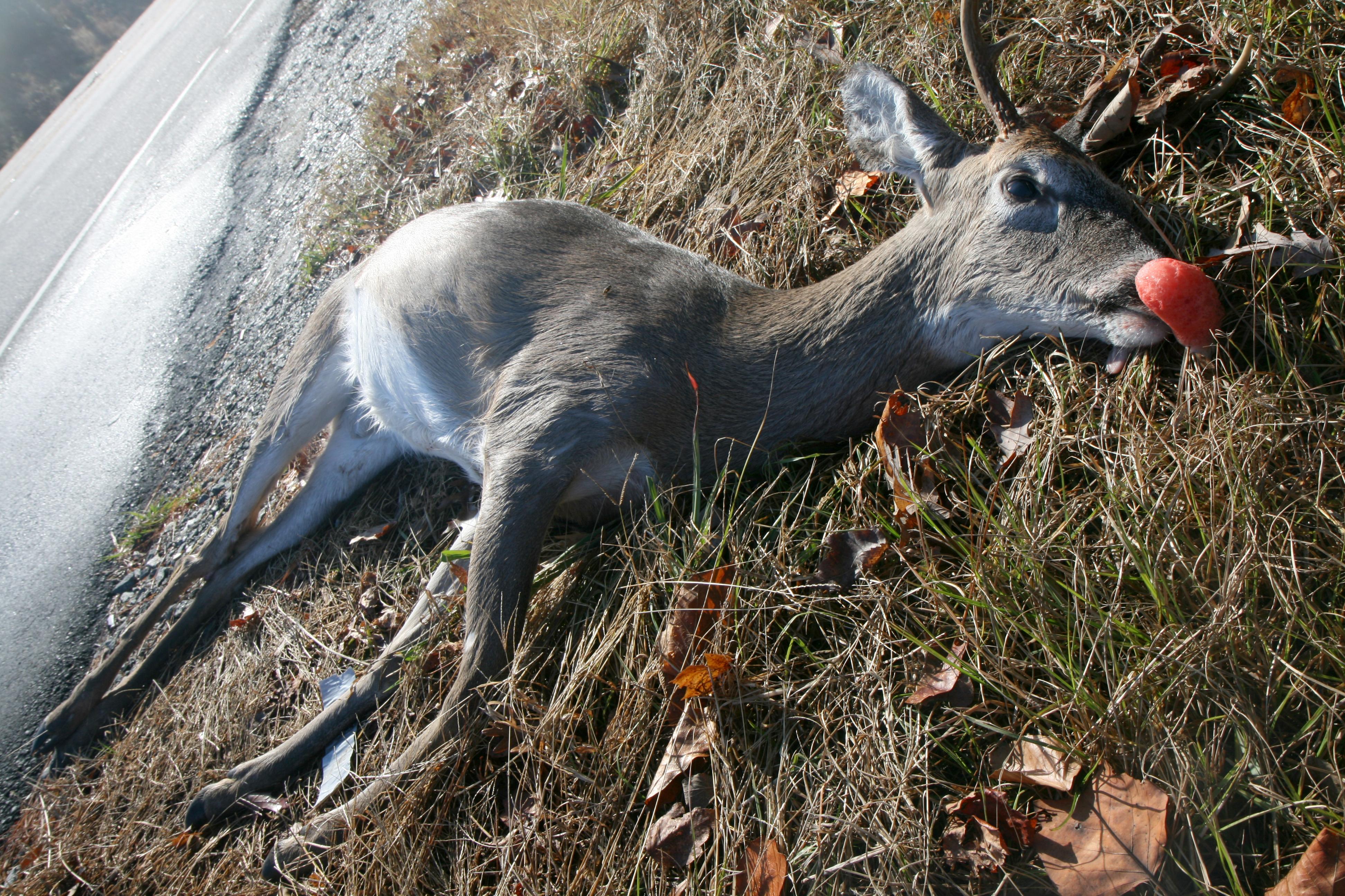 Get Well Soon Dead Deer with Balloon