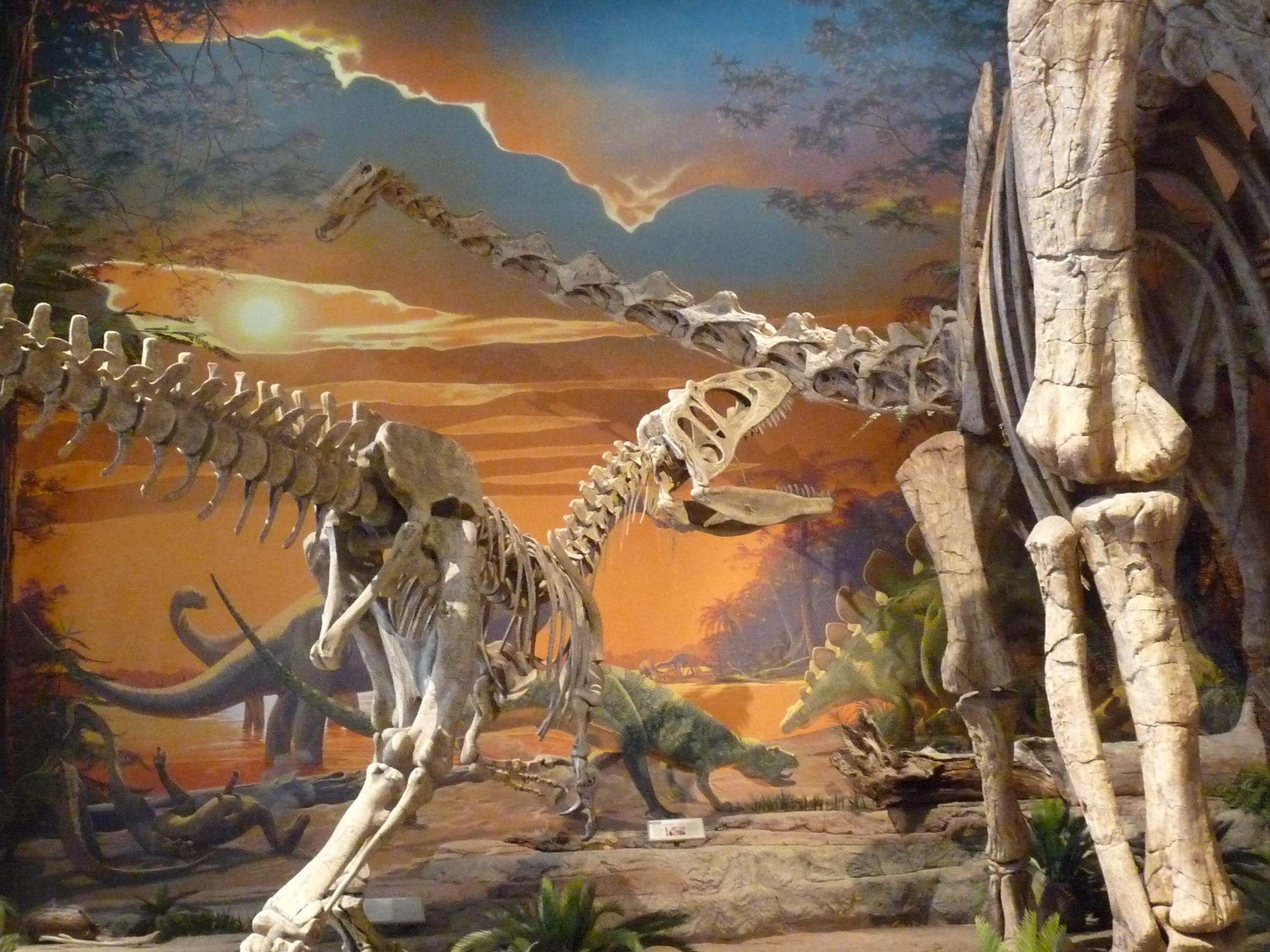 Natural History Vs High Throughput