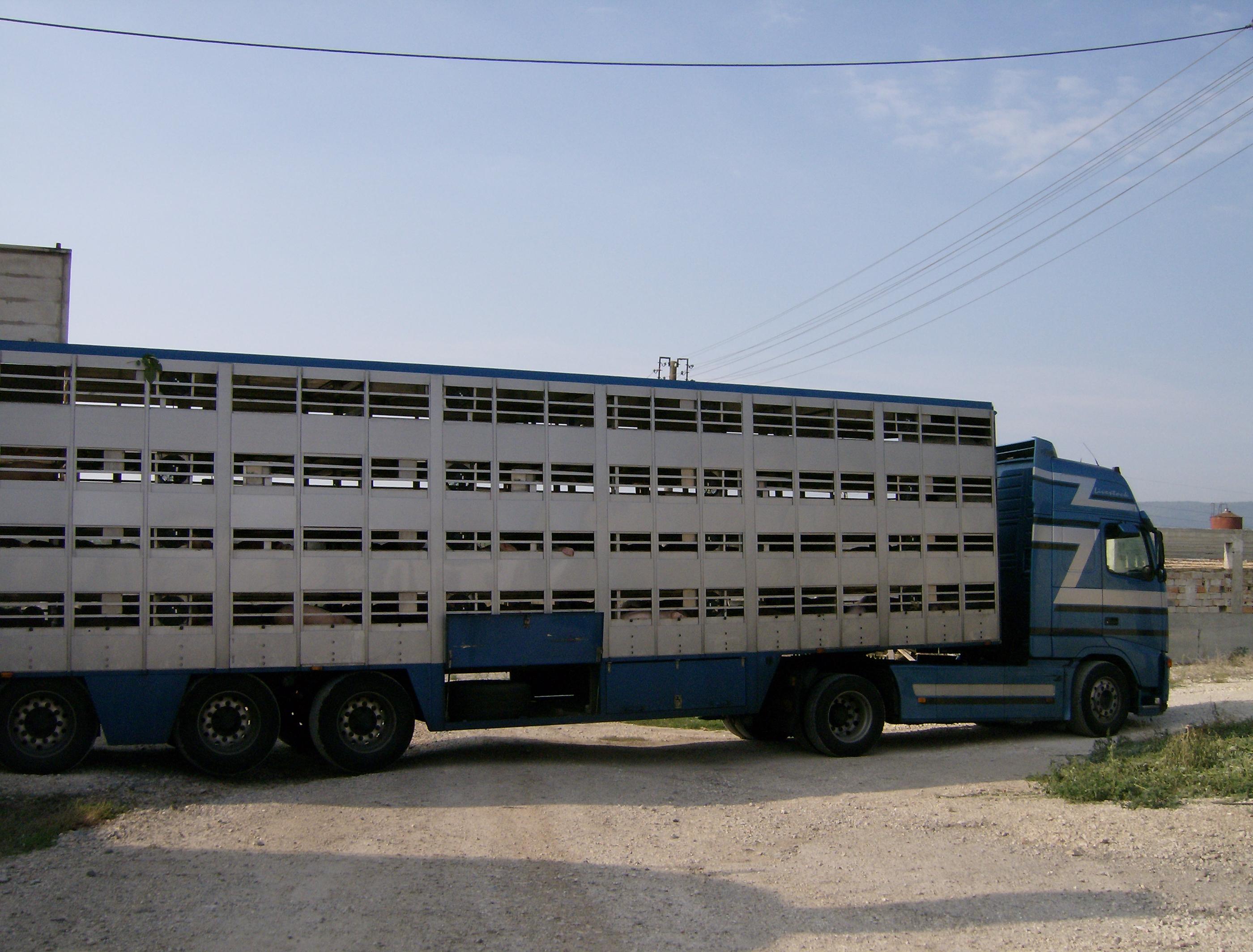 File Animal Transport 7 Jpg Wikimedia Commons