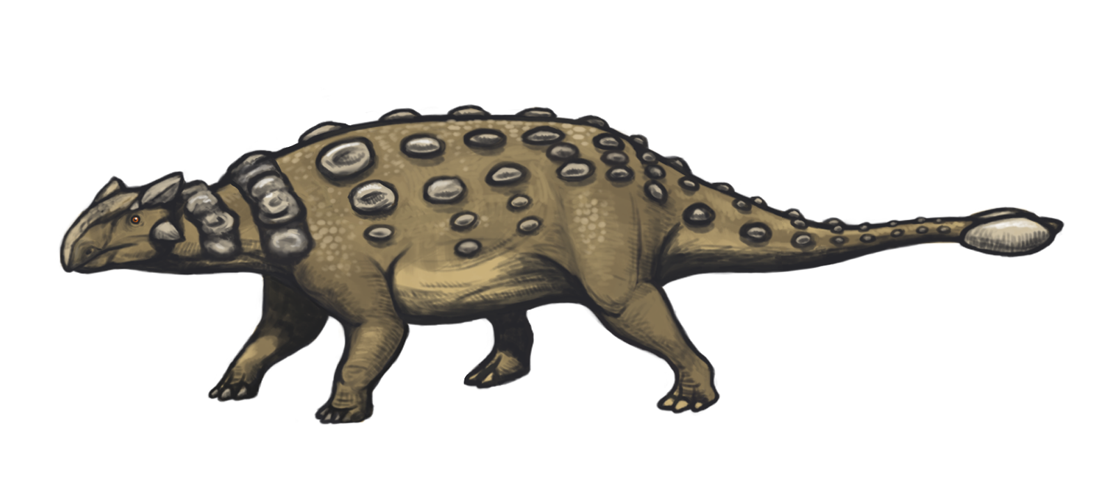 https://upload.wikimedia.org/wikipedia/commons/3/36/Ankylosaurus_magniventris_reconstruction.png