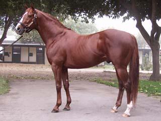 サラブレッド - Horse Scanner