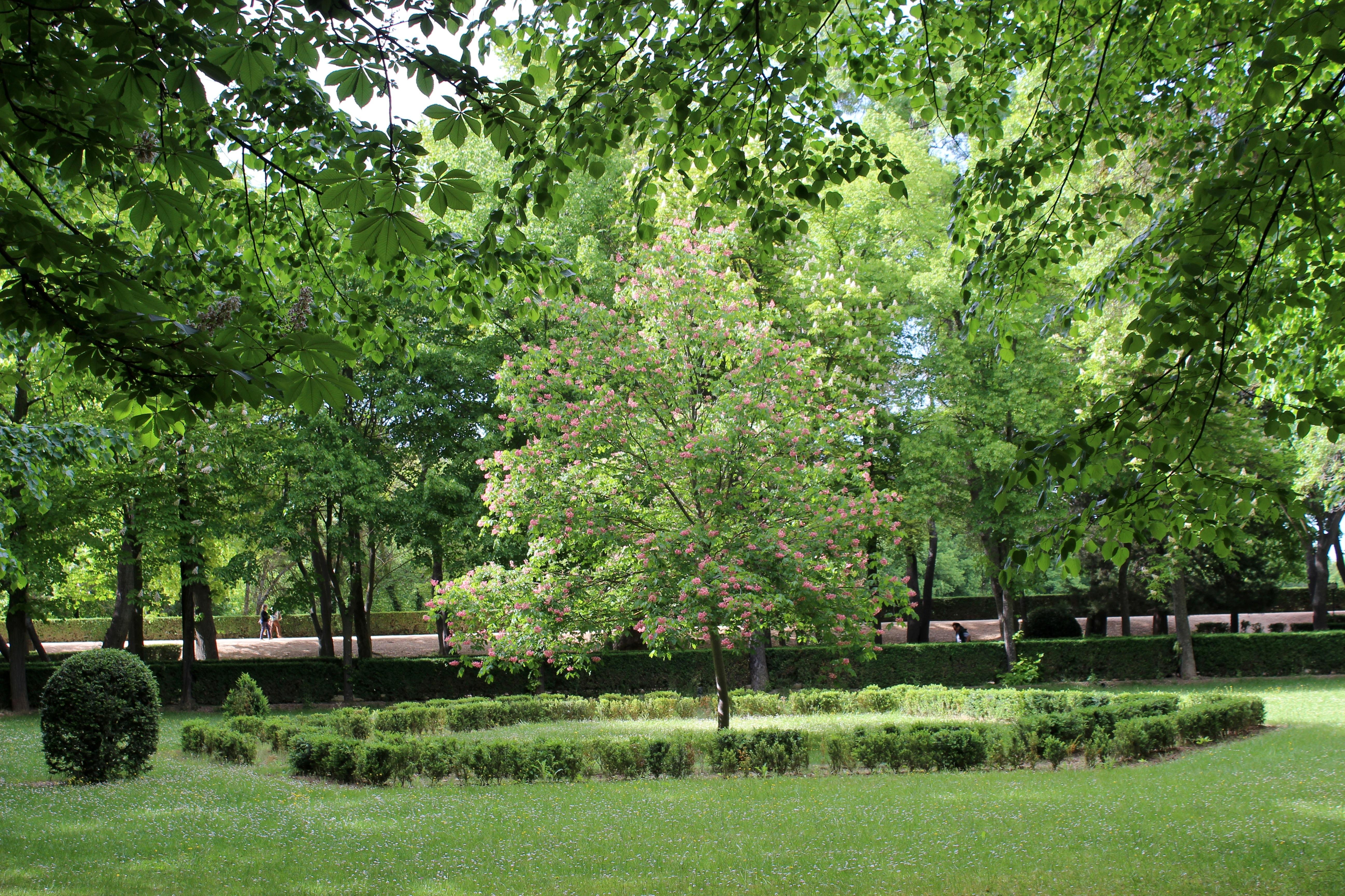 File aranjuez jard n de la isla 06 jpg wikimedia commons for Jardin de la isla aranjuez