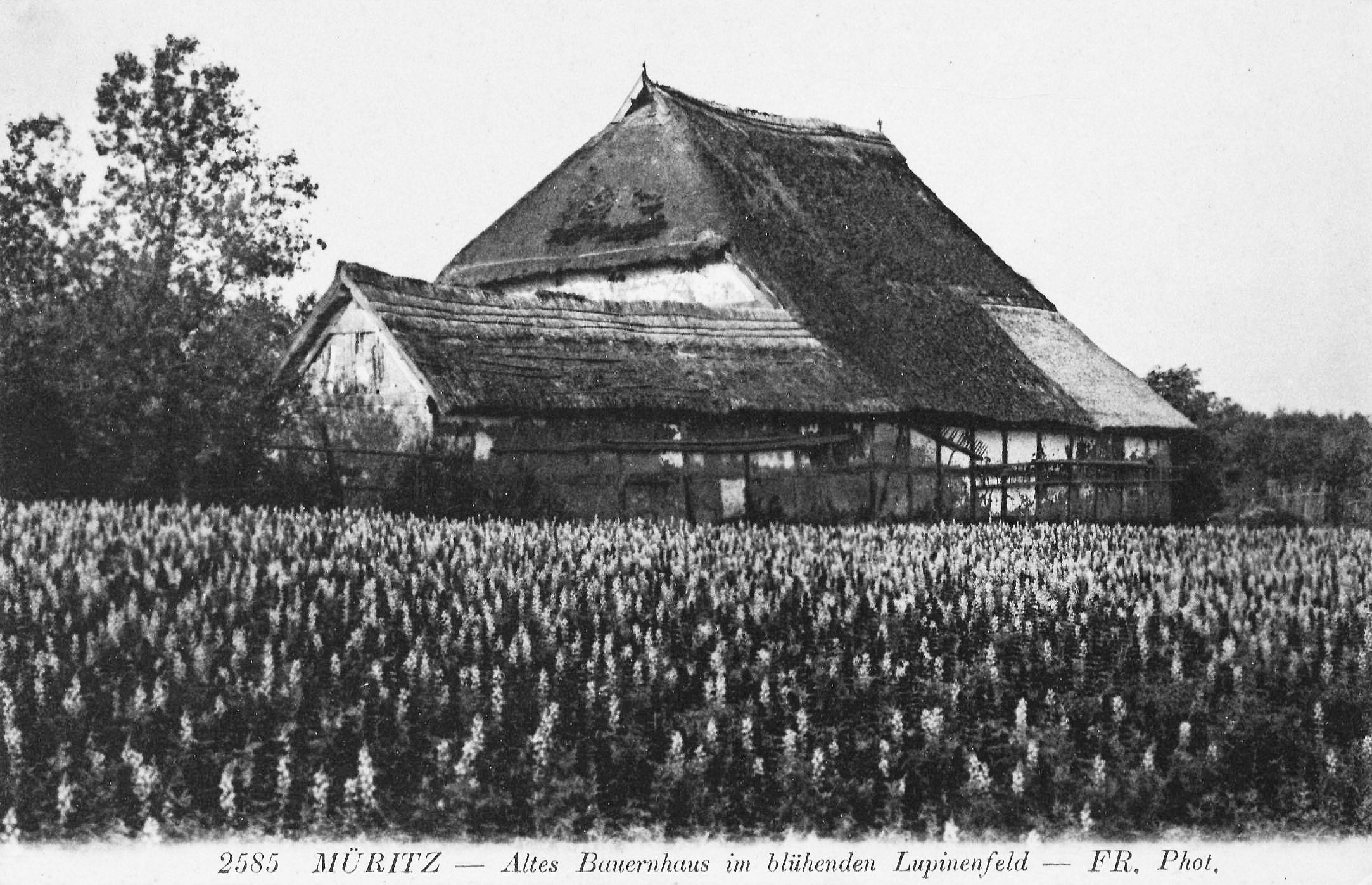 File Bauernhaus In Graal M 252 Ritz Mecklenburg Um 1900 Jpg