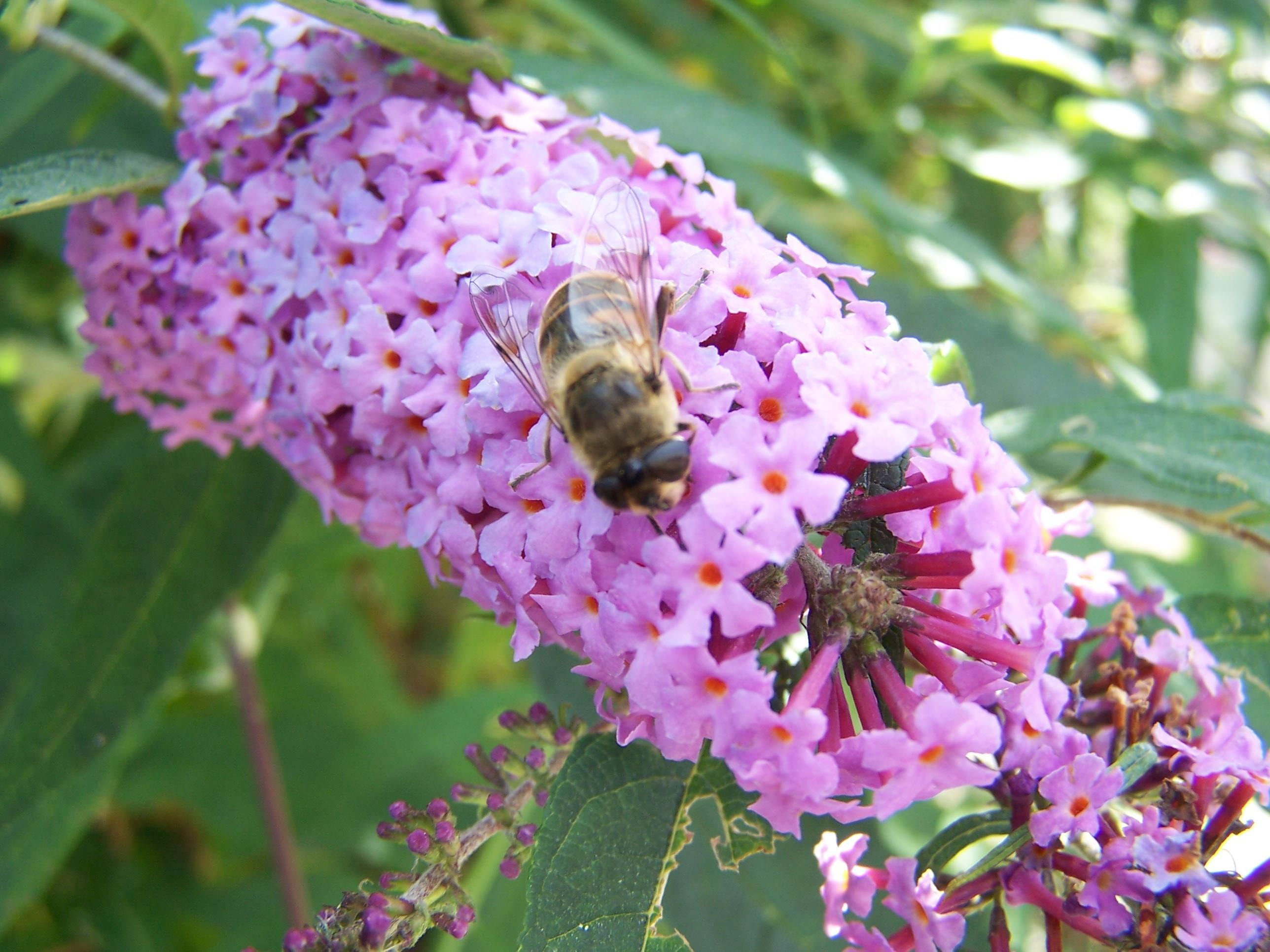 Free photo Purple Flower Bee Nature Insect Free Image on
