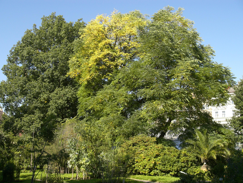 Botanická zahrada nabízí příjemné místo k zastavení a oddechu
