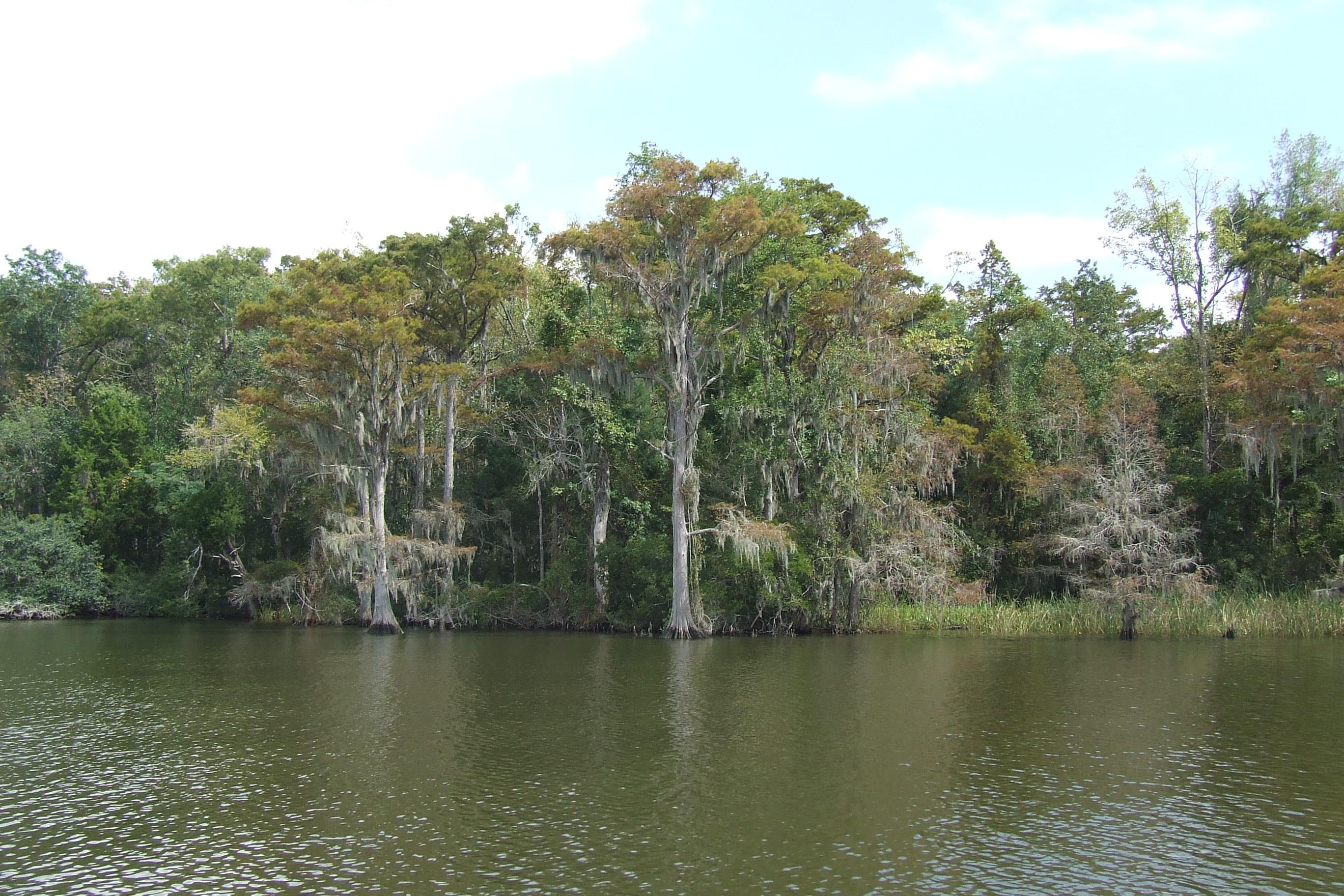 File:Delta landscape, Alabama (5984944050).jpg - Wikimedia