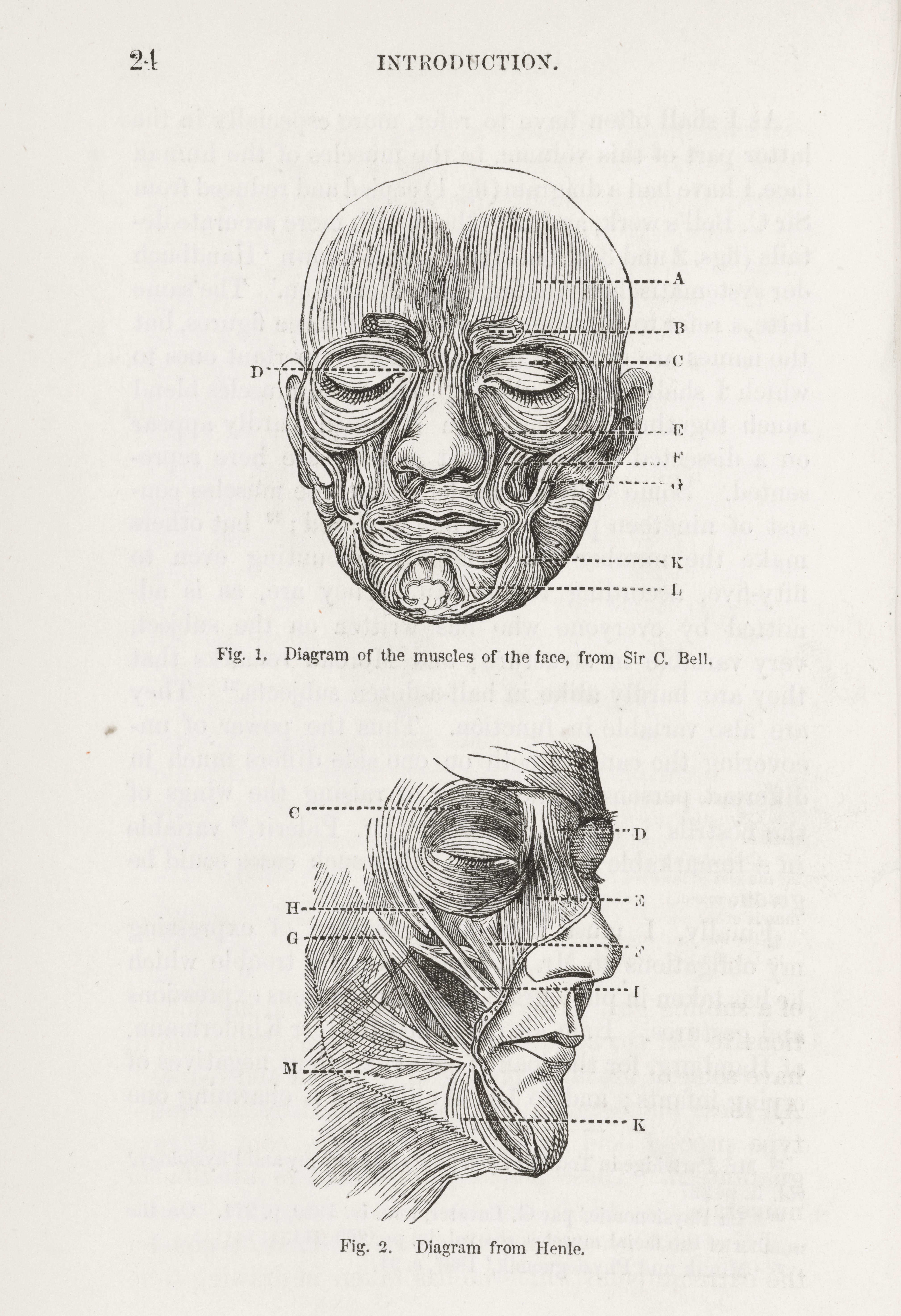 Filediagrams Of Muscles Of The Face From Darwins Expressions