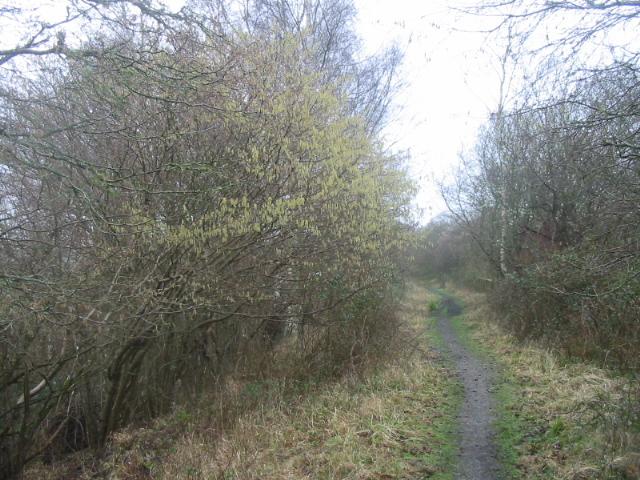 Disused railway line near Powerstock Common - geograph.org.uk - 333813