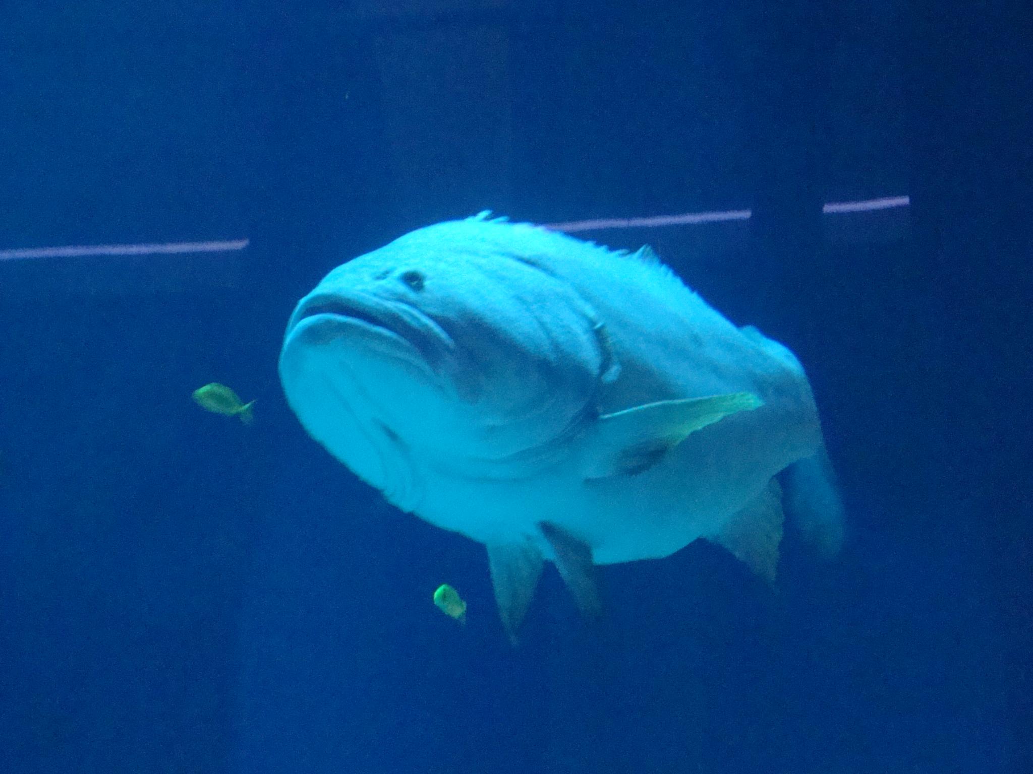 Image Result For Dubai Aquarium And