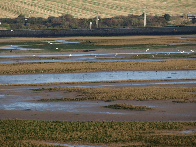 From Lelant Saltings across to the Causeway - geograph.org.uk - 1780393
