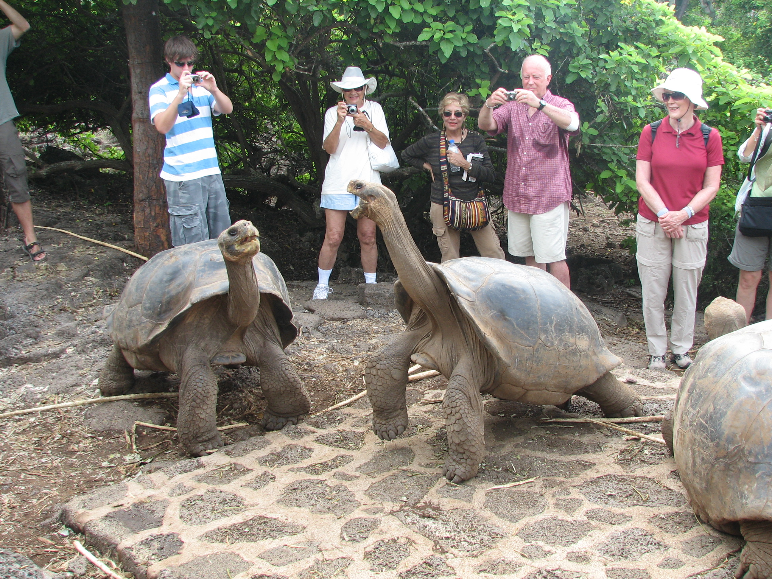 GalapagosTortoiseTourists.jpg