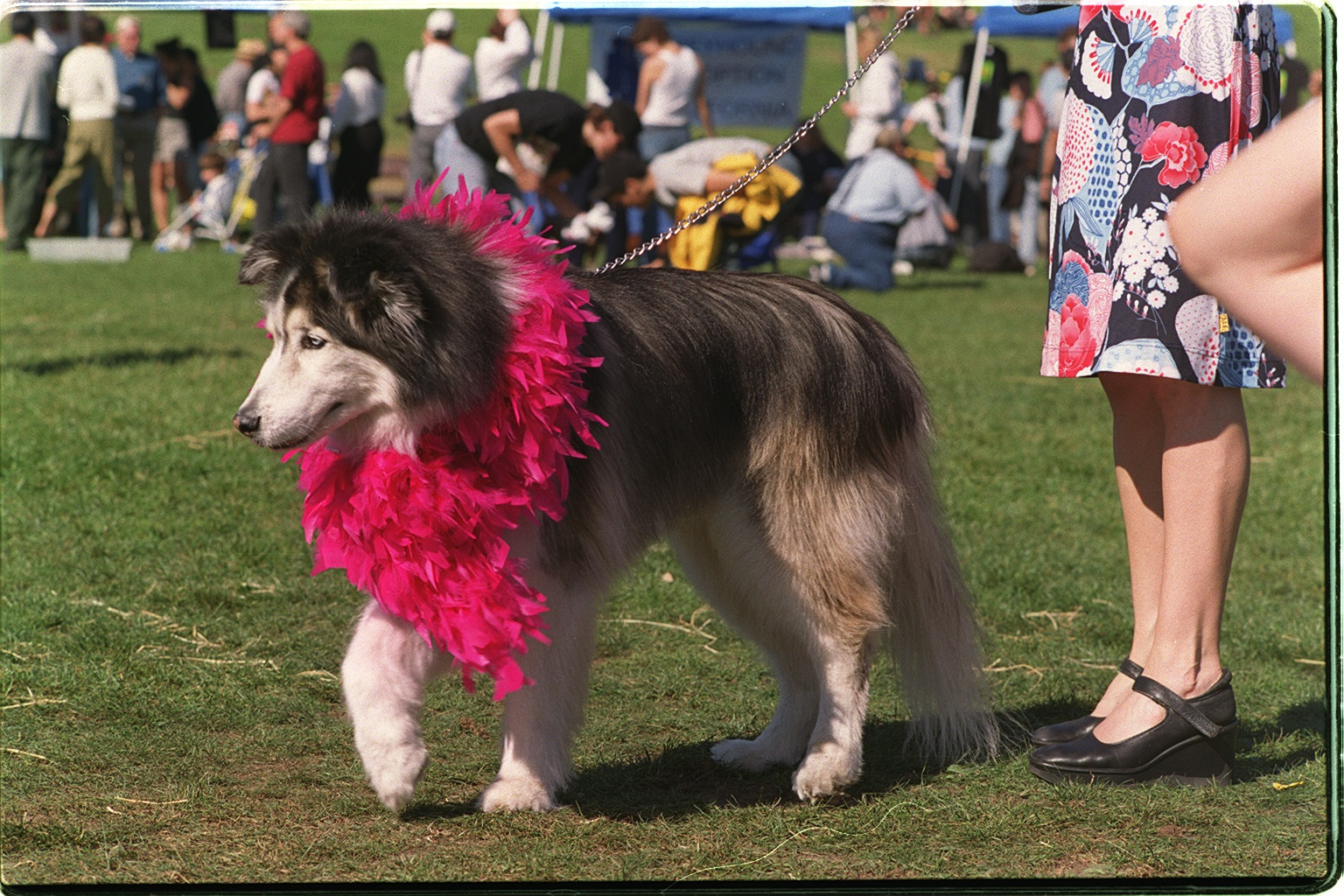 file:husky wearing halloween costume, 2002 - wikimedia commons