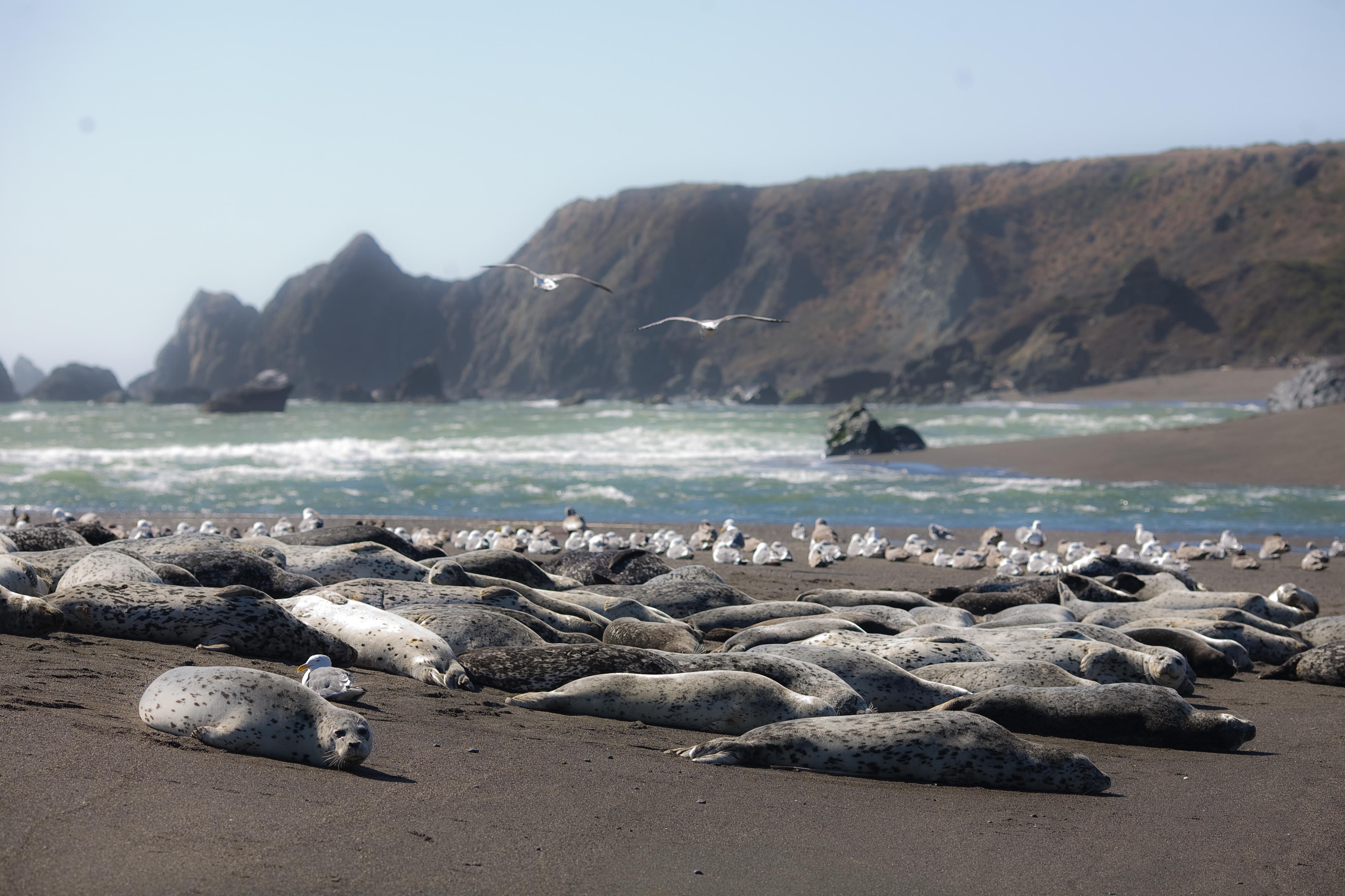 Image result for bodega bay california