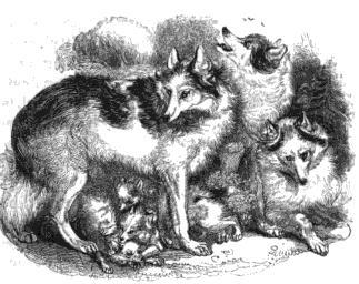 hare indian dog the hare indian dog is an extinct domesticated canid ...