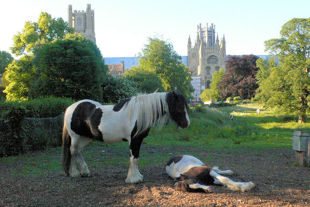 Horses at Ely Cathedral - geograph.org.uk - 2060738