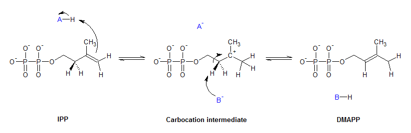 The mechanism for the isomerization between IPP and DMAPP. Generic ...