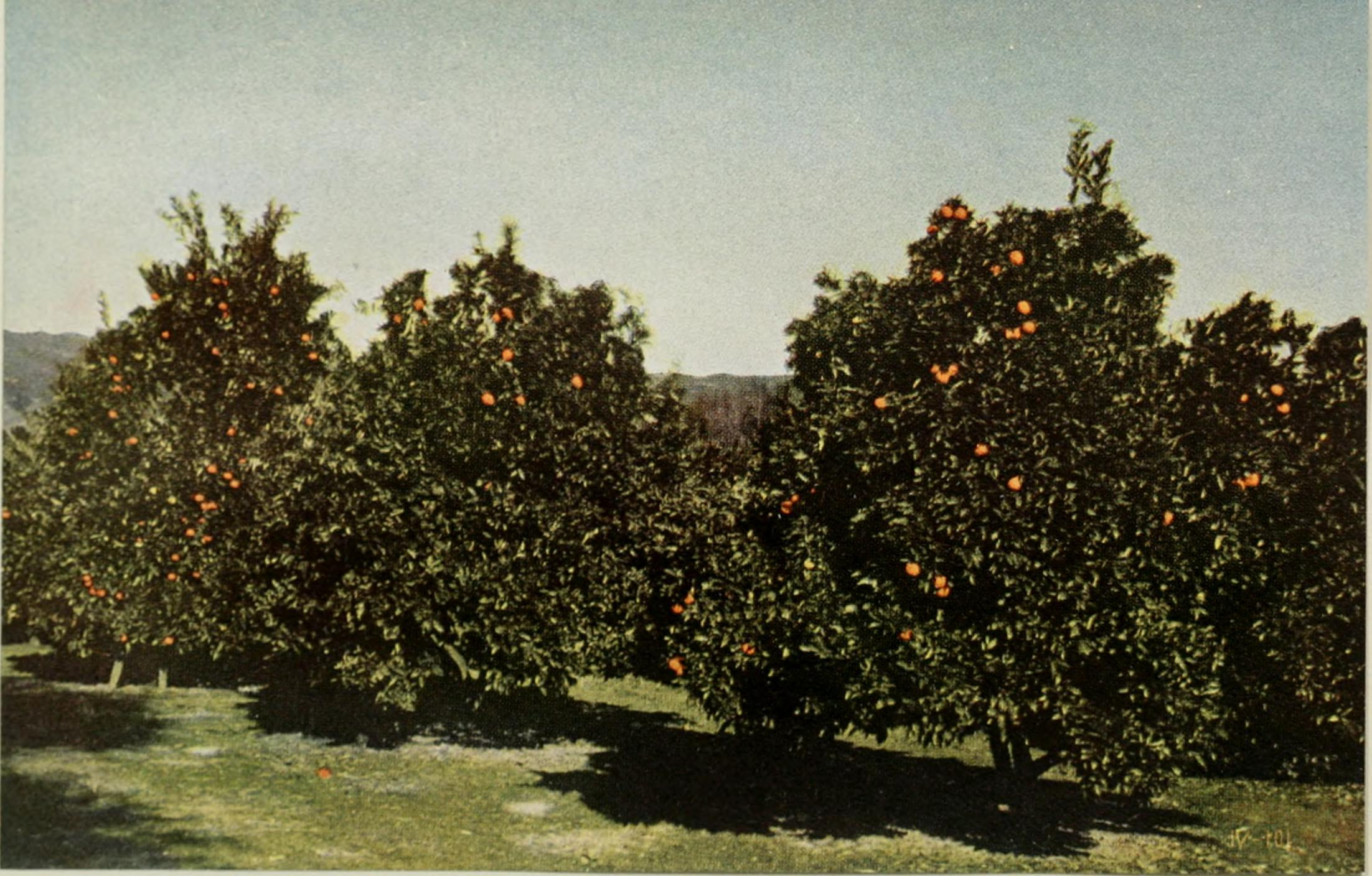 more than 100,000 experiments made during forty years devoted to plant improvement, with the assistance of the Luther Burbank Society and its entire membership