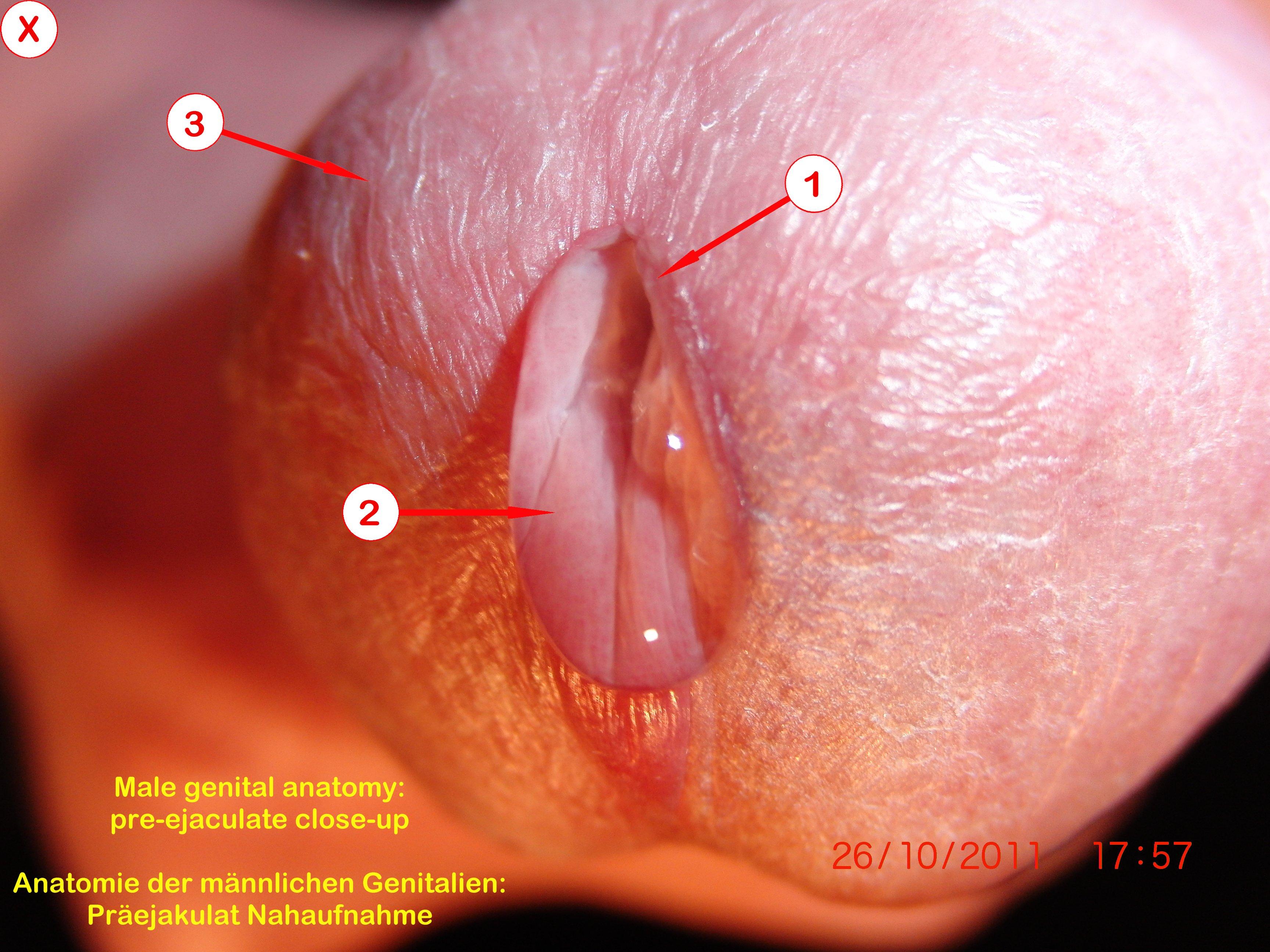 Urethral sounding cumming hard and deep penetration 9