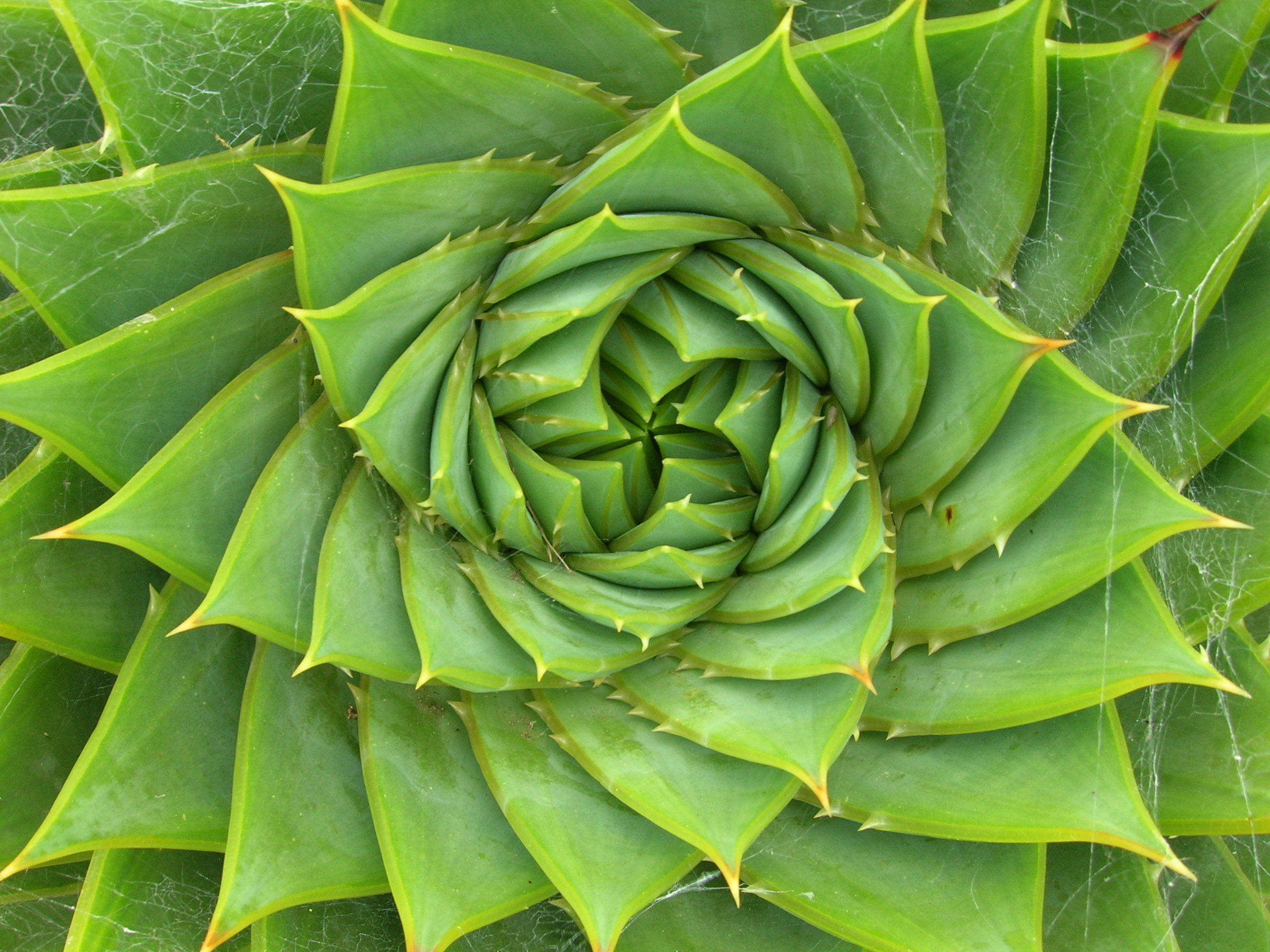Nature S Aloe Vera Gel For Hair