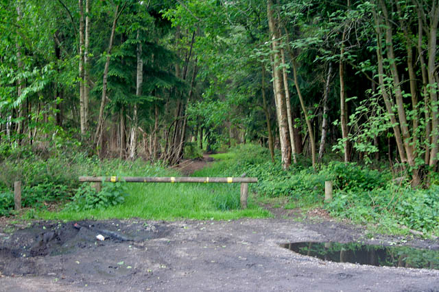 Stapleford Woods - geograph.org.uk - 439626