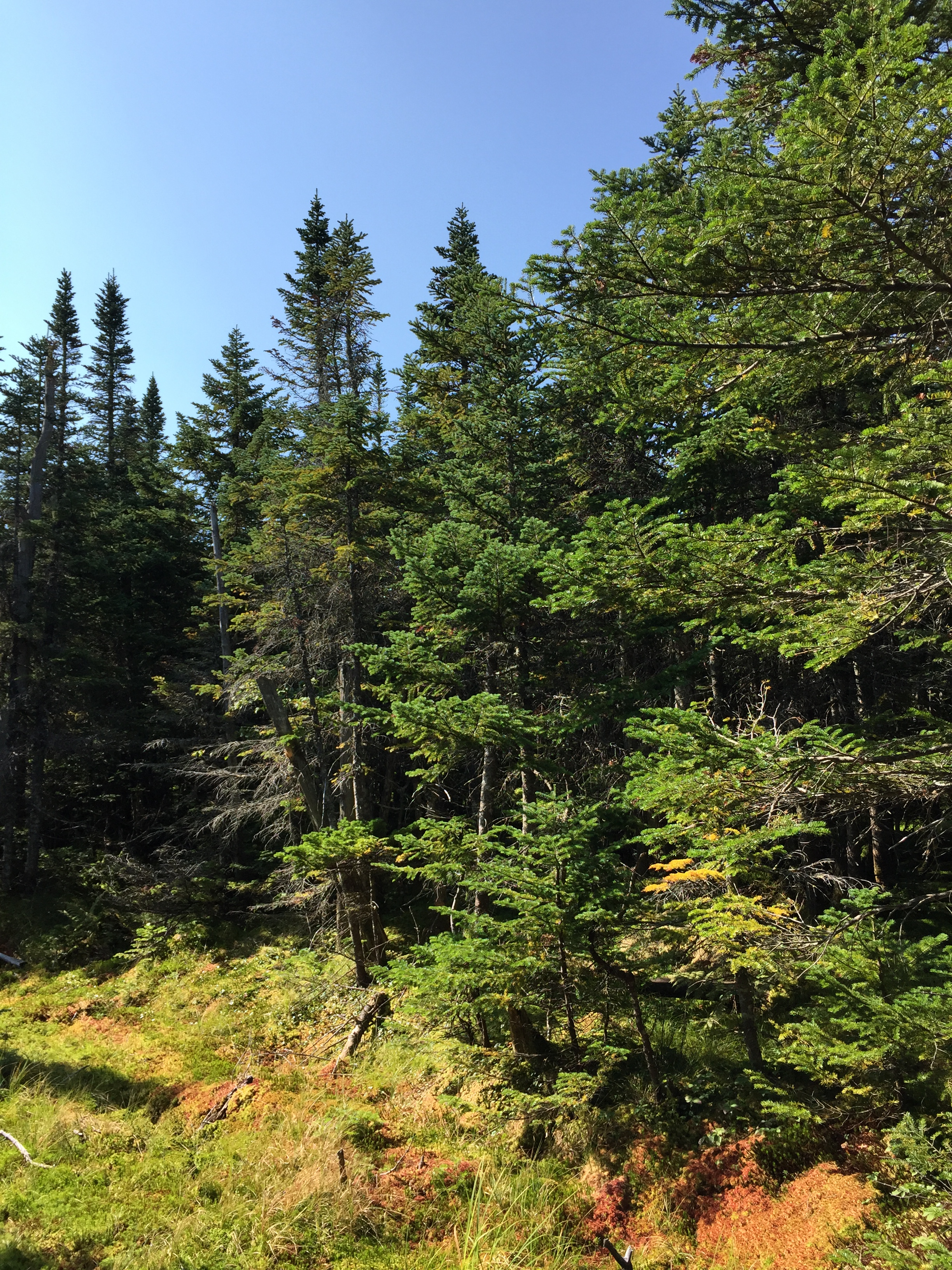 New york essex county keene - File 2016 09 04 10 24 25 Forest Along The Van Hoevenberg Trail