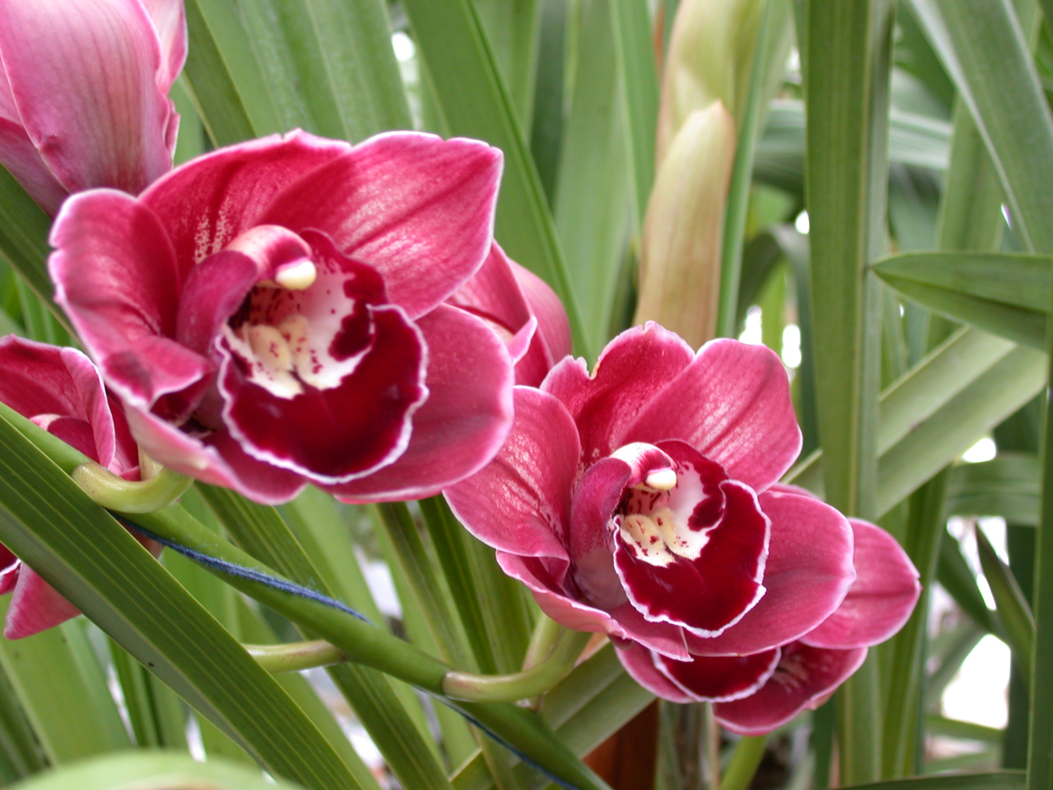 orchids wallpaper free