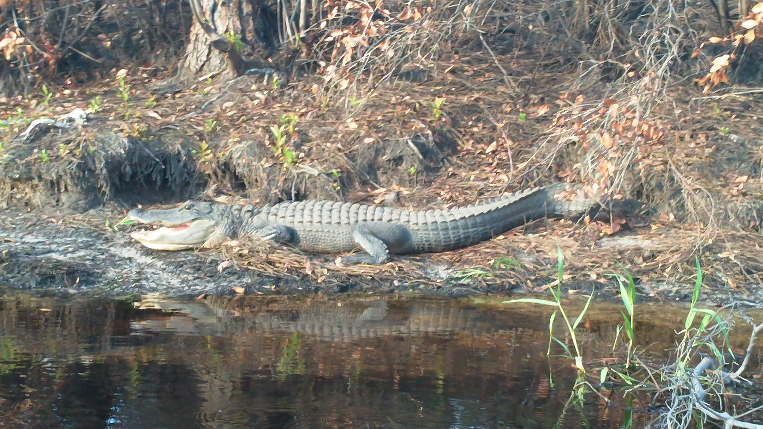 Okefenokee National Wildlife Refuge