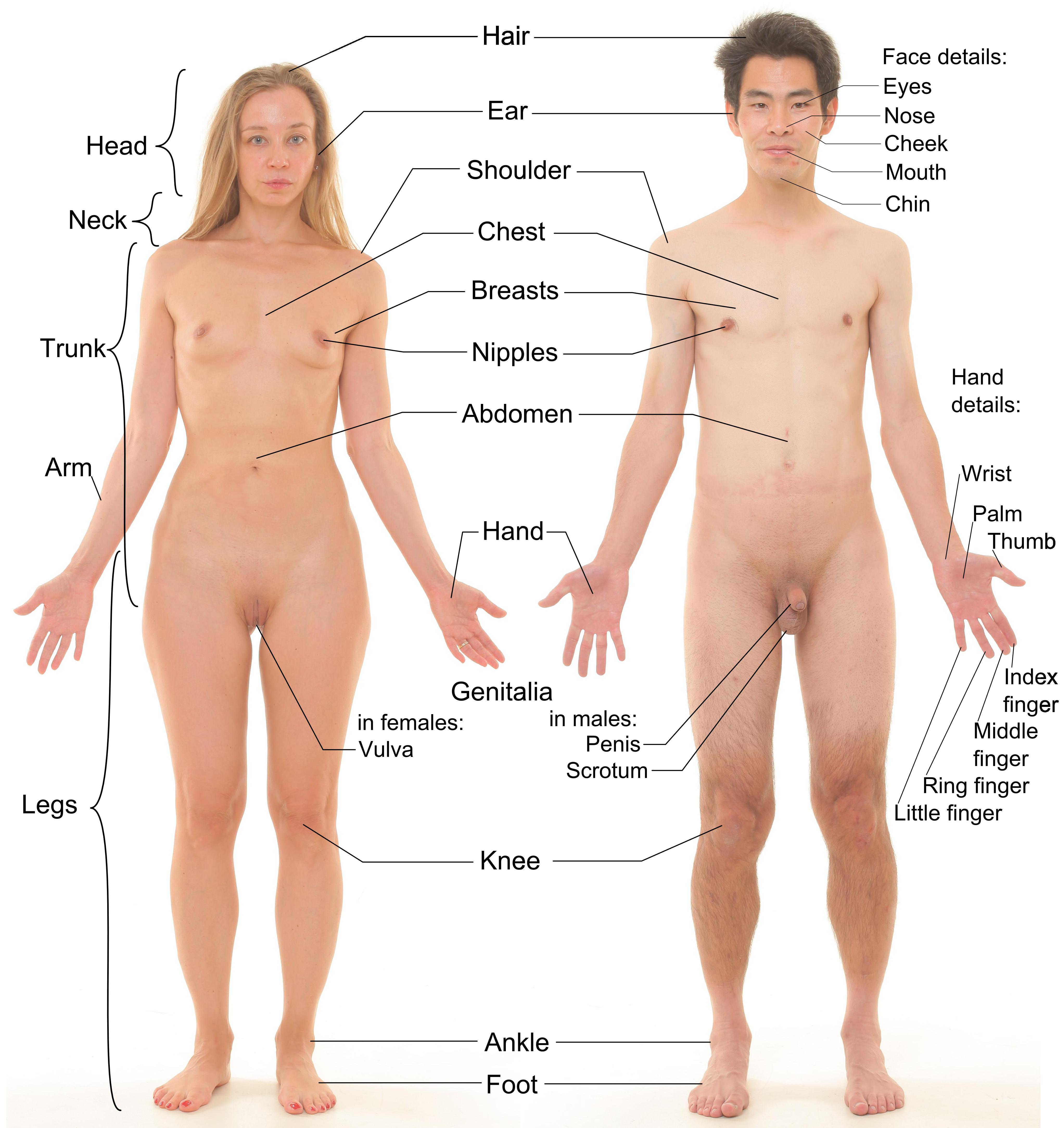 Naked girl lesbian porn