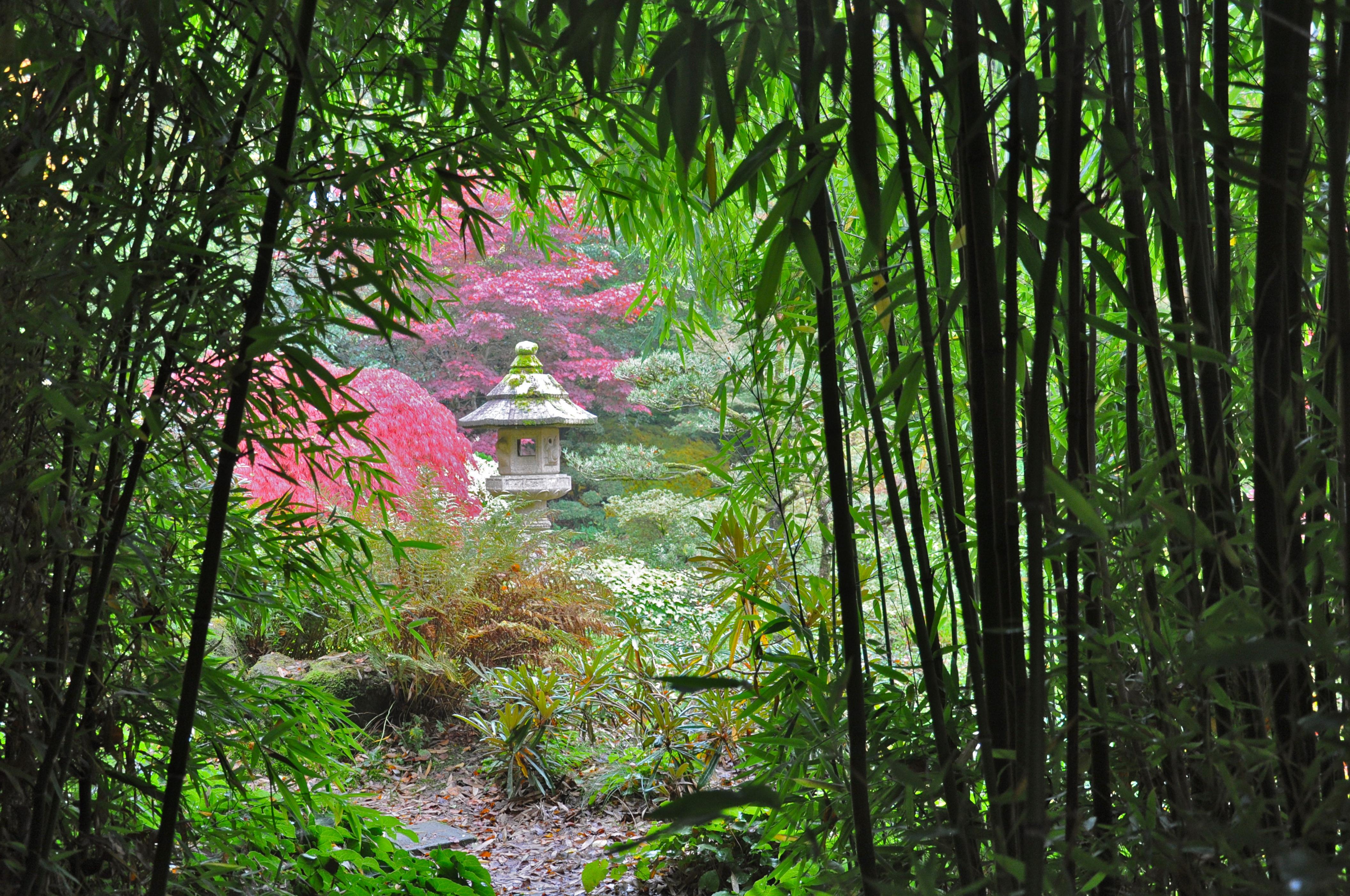 File bambous et lanterne du jardin du soleil levant jpg - Lanterne de jardin ikea ...