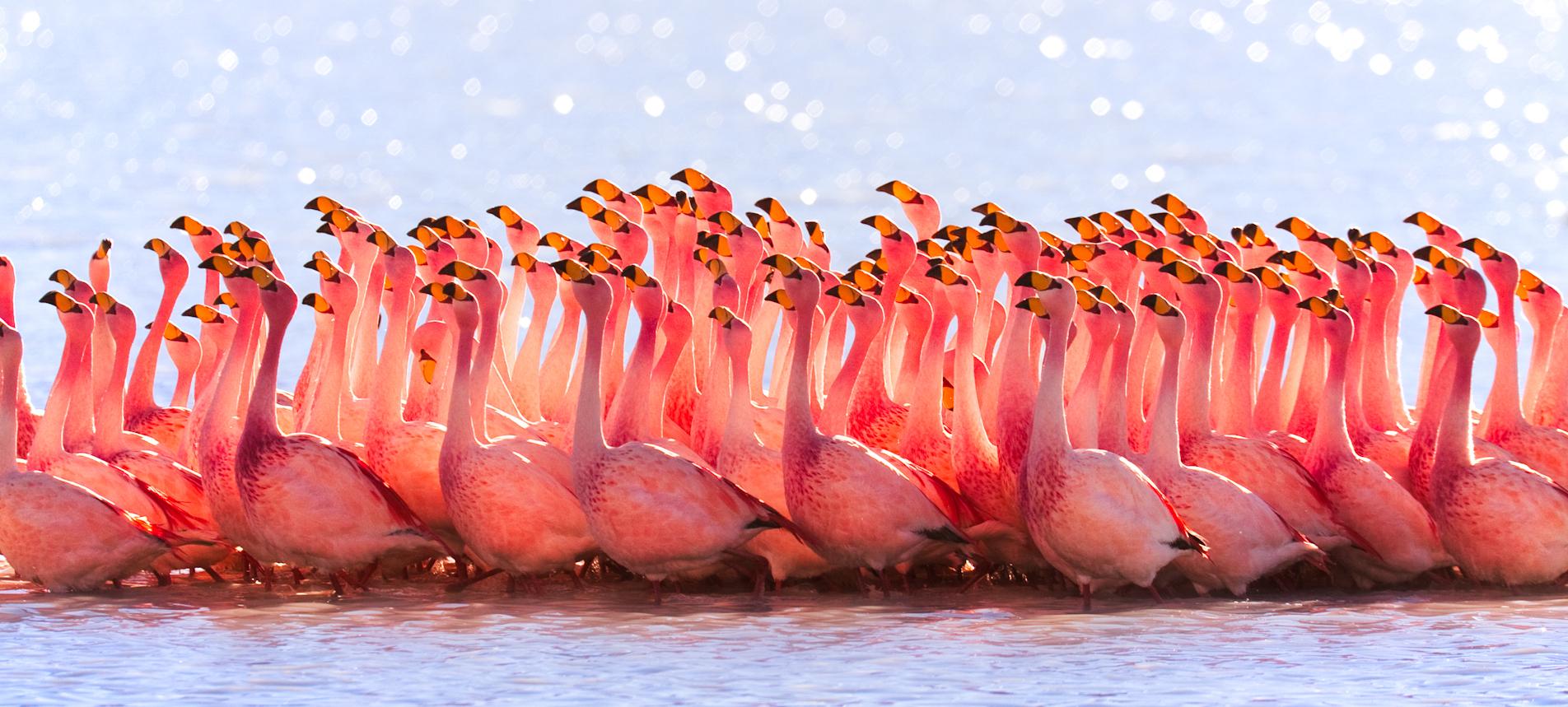 Comment Faire La Couleur Saumon rose (couleur) — wikipédia