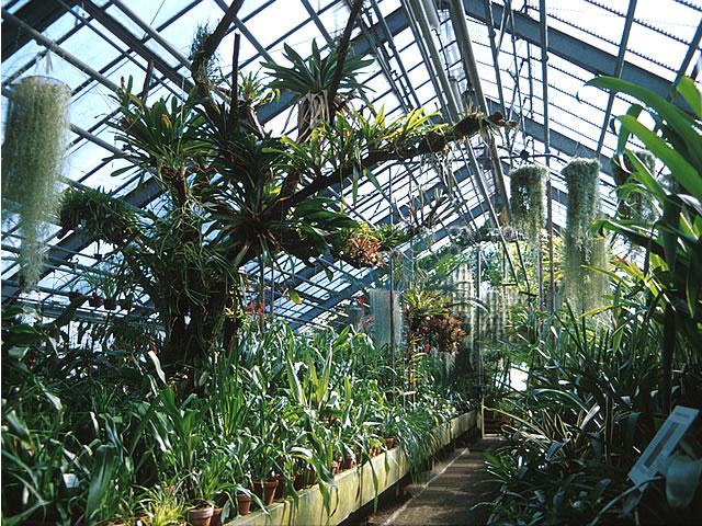 Dateibotanischer Garten Heidelberg Bromelienschauhausjpg Wikipedia