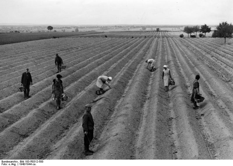 Bundesarchiv Bild 183-R0312-500, Mark Brandenburg, Spargelernte
