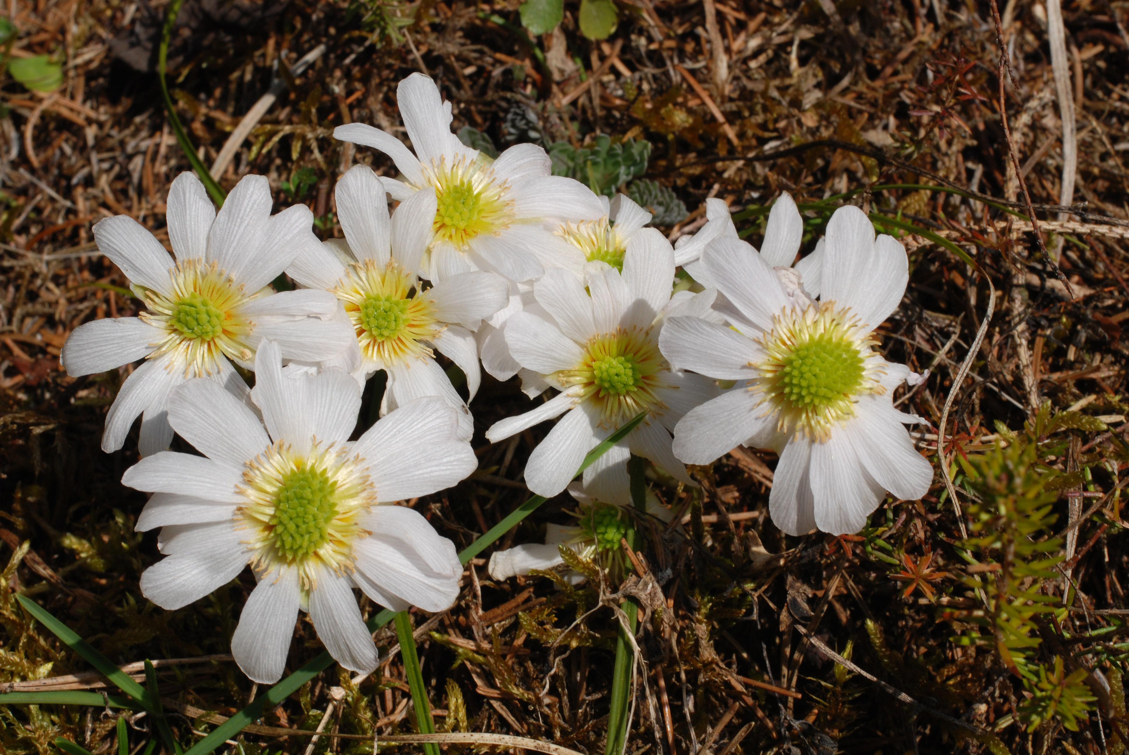 цветы и цветки